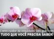 Como cuidar de orquídeas? Um guia com tudo que você precisa saber!
